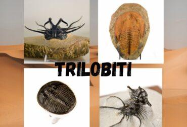 Ce sunt trilobitii?